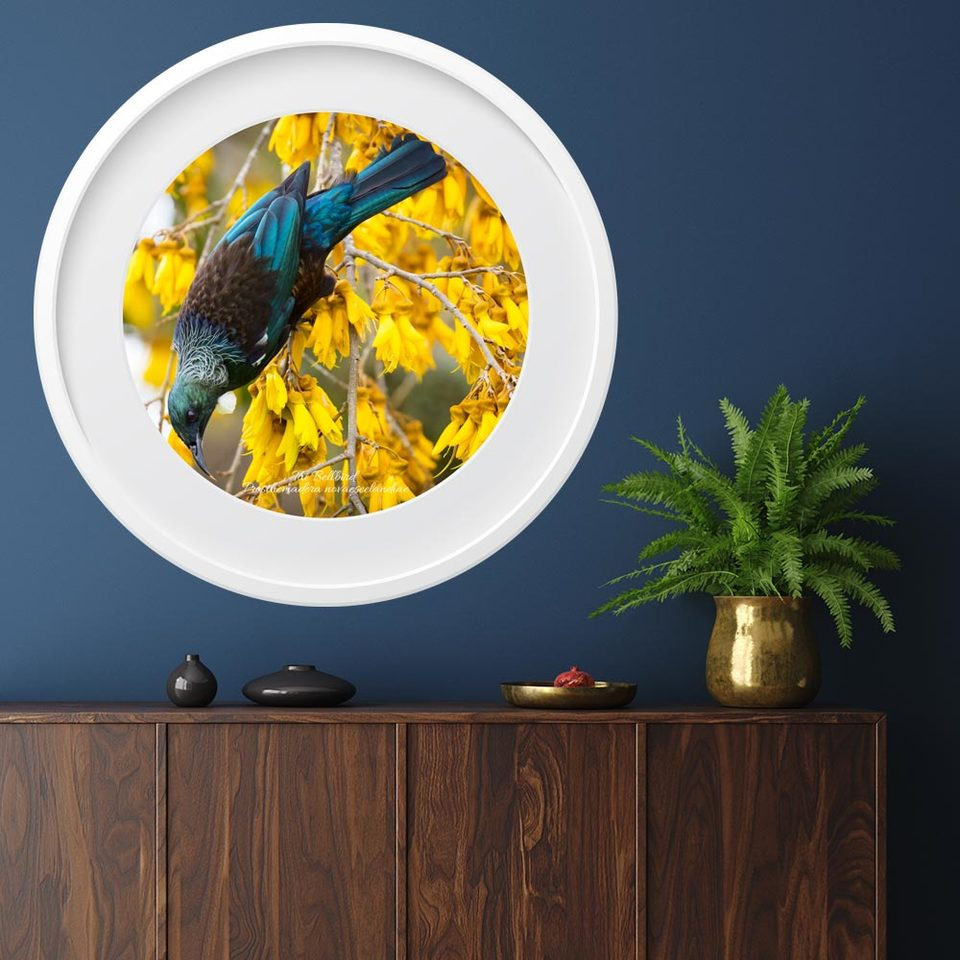 Vinyl Art Prints - Tui Bird in a Kowhai Tree